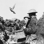 Carrier pigeon release