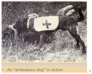 RMR history ambulance dog in action